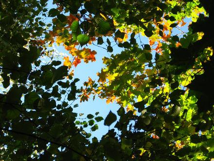 Обои Небо сквозь листву