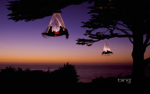 Обои Подвесные дома на деревьях (Bing)