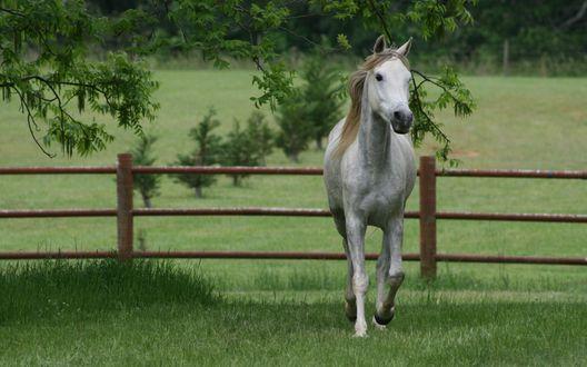 Обои Красивый конь в загоне