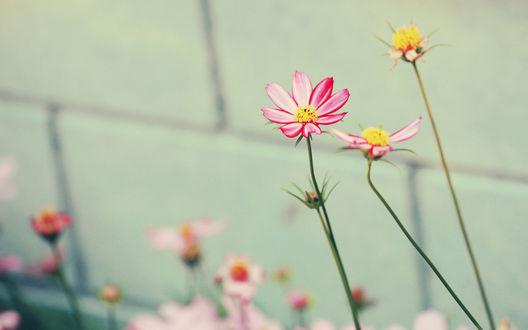 Обои Цветы у стены