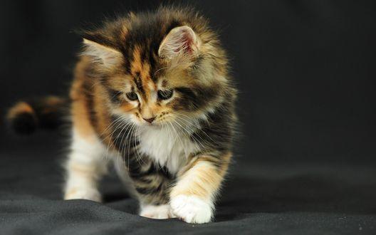 Обои Котёнок