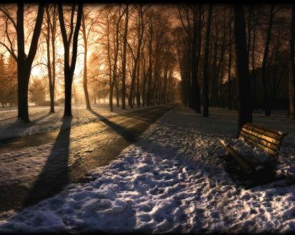 Обои Зимний парк