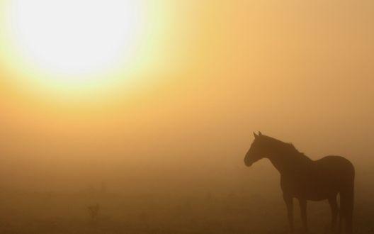 Обои Конь стоит в тумане