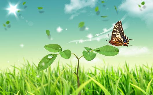 Обои Бабочка на молодом ростке