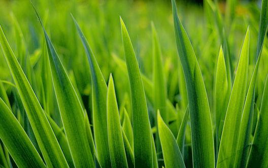 Обои Молодая зеленая травка