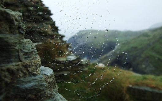 Обои Паутина в каплях дождя на фоне горного пейзажа