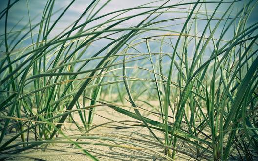 Обои Трава растёт из песка