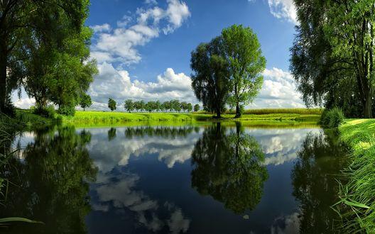 Обои Озеро с красивыми деревьями