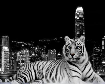 Обои Тигр на фоне Лондона