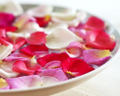 Обои Лепестки розы в тарелке
