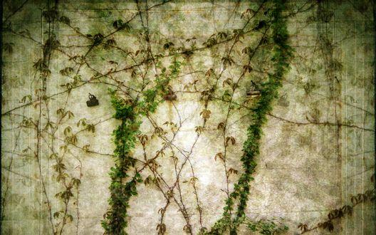 Обои Вьющееся растение разрослось по всей стене