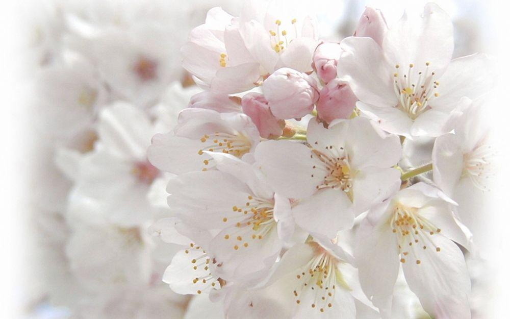 Белый цветок открытка, для годовщины