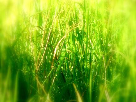 Обои Зелёная травка