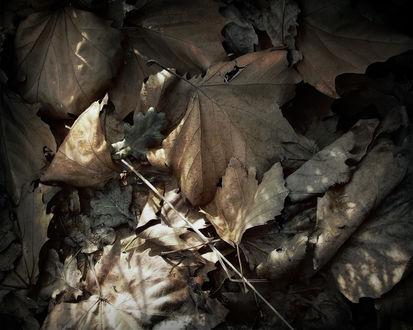 Обои Опавшие осенние листья