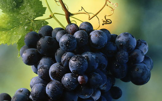 Обои Виноград в каплях