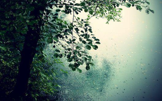 Обои Дождь в лесу