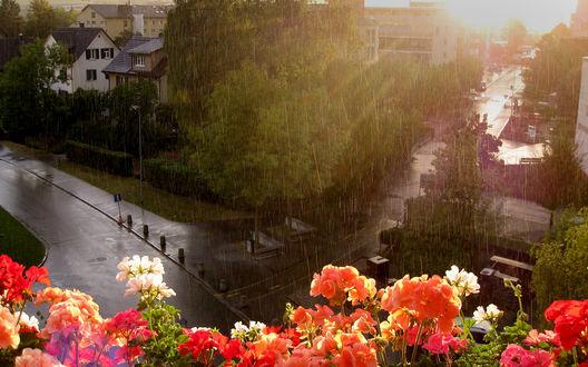 Обои Чудесный вид на летний город с балкона, на котором цветет герань. Капли дождя орошают дороги, городские улицы и деревья