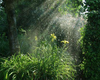 Обои Дождь в глухом лесу