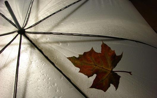 Обои Кленовый листок на промокшем от дождя зонте