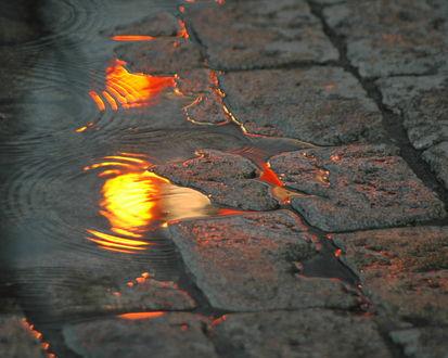 Обои Оранжевый свет витрин отражается в луже возникшей на брусчатой мостовой
