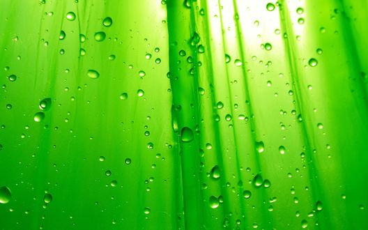 Обои Капли дождя стекают по листьям