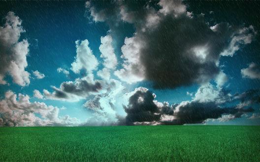 Обои Внезапный дождь в жаркий летний день прибивает траву на поле и быстро впитывается в благодарную почву