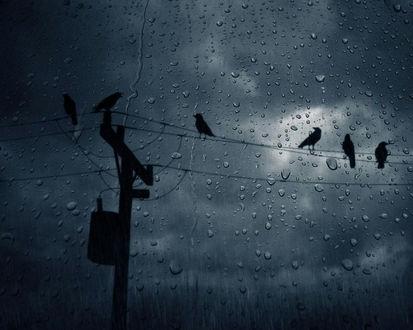 Обои Через стекло, покрытое каплями дождя, видны силуэты ворон, сидящих на проводах