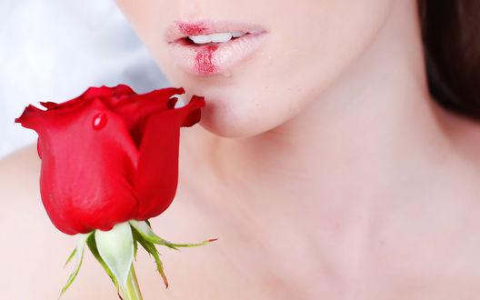 Обои Девушка с розой и красными блёстками на губах