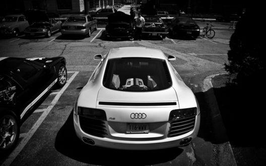 Обои Белая Ауди / Audi