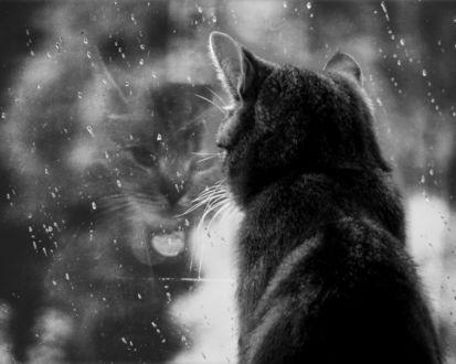 Обои Кошка наблюдает за дождём через стекло