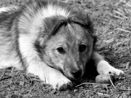 Обои Грустный пёс лежит на траве, поджидая хозяина