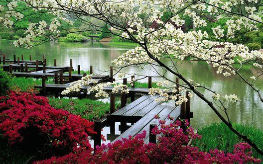 Обои Парк в японском стиле