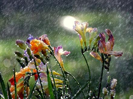 Обои Цветы под сильным проливным дождём