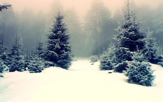 Обои Заснеженный лес