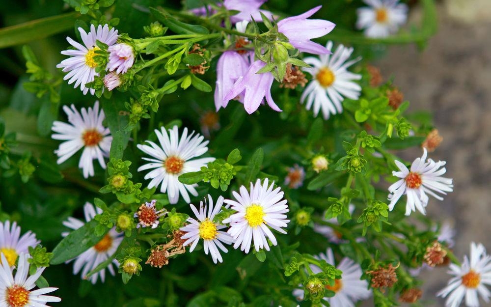 Летние полевые цветы