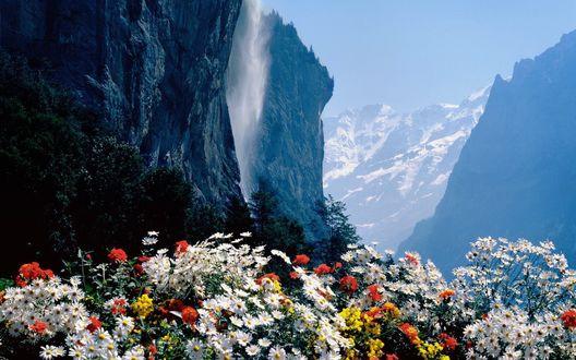 Обои Цветы растут у подножья гор