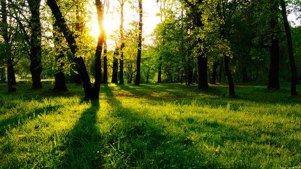 Обои Красивый лес в лучах солнца