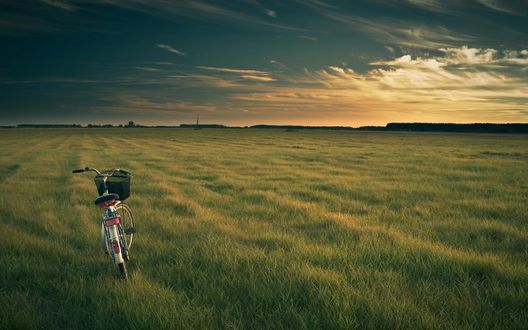 Обои Одинокий велосипед на скошенном зеленом поле