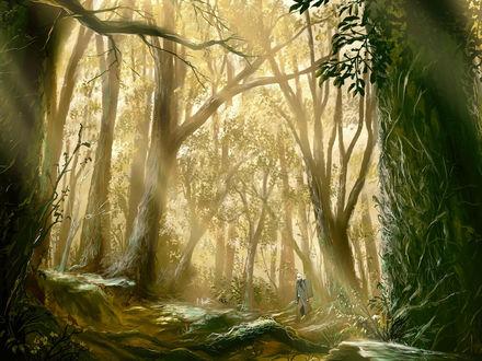 Обои Парень идет по лесу (аниме Bug Master)