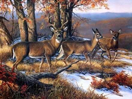 Обои Семейство оленей в  осеннем лесу, выпал первый снег