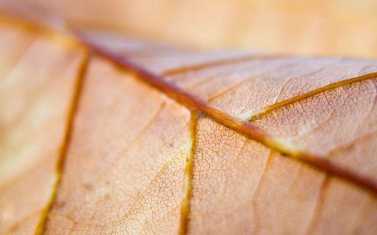Обои Желтый осенний лист