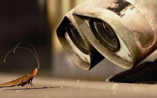 Обои Волли смотрит на таракана
