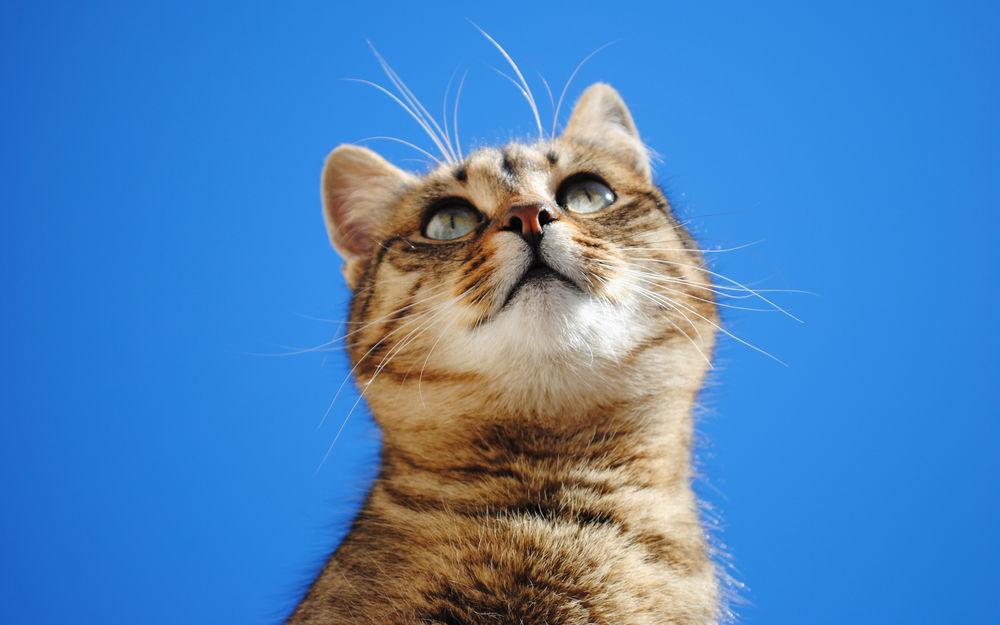 Прикольные, картинки на рабочий стол кот прикольный