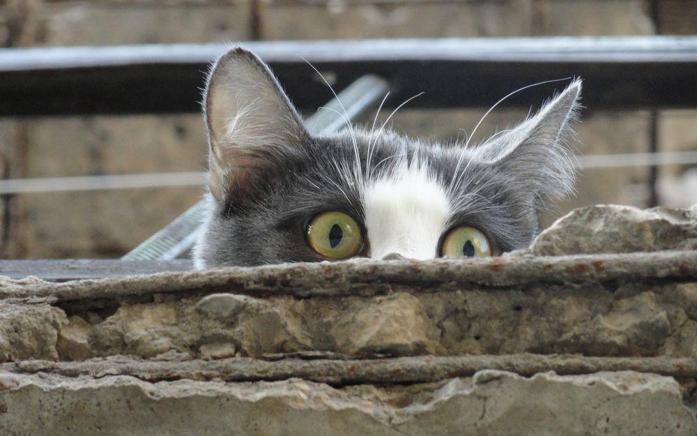 Фото выглядывающего кота