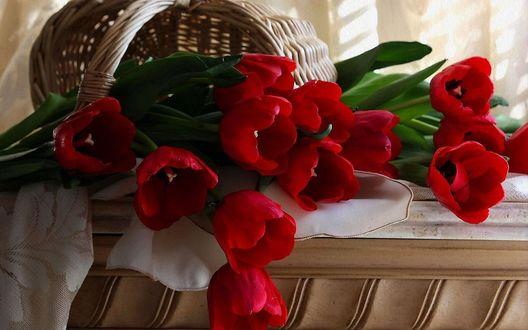 Обои Опрокинутая корзинка с красными тюльпанами
