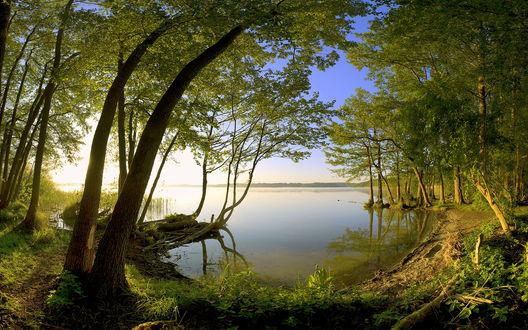 Обои Красивый пейзаж озера со стороны леса