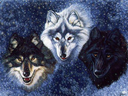 Обои Волки трёх разных мастей