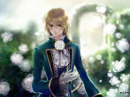 Обои Джек из аниме 'Pandora Hearts / Сердца Пандоры' на фоне кустов белых роз