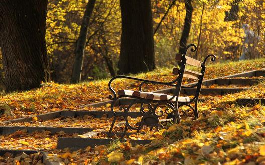 Обои Скамейка в осеннем парке
