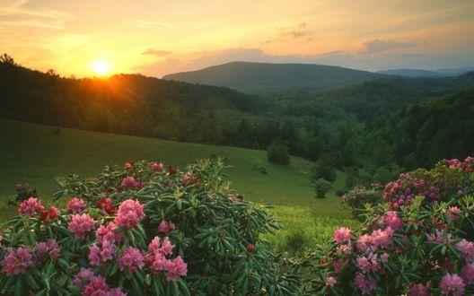 Обои Солнце медленно поднимается над ещё спящим лесом.